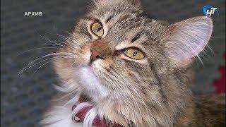 Из областной филармонии пропал пушистый талисман – кошка Тоша