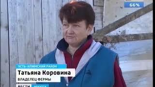 Медведи наводят страх на жителей жителей Иркутской области