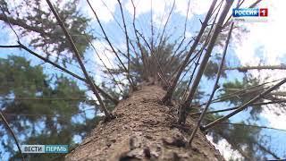 В лесах Перми заканчивается срок особого противопожарного периода