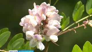 В калининградском Ботаническом саду начался сезон сбора урожая