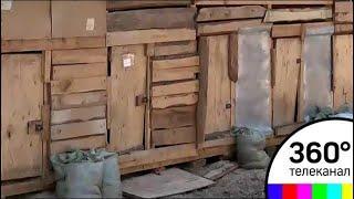 Собачий лай не даёт покоя жителям посёлка Ильинский в Раменском районе
