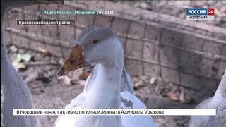 В Мордовии налаживают производство гусиного хамона