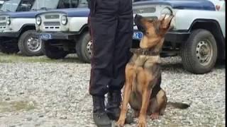 В Ярославле служебная собака помогла задержать грабителя