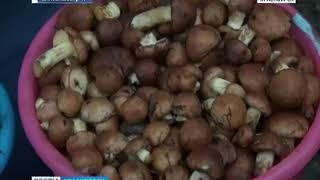 Сбор грибов подходит к концу