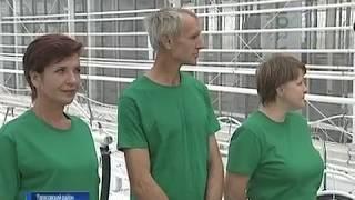 В Тарасовском районе открылся уникальный для России тепличный комплекс