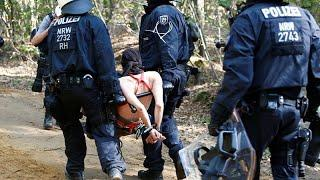 Противостояние полиции и защитников леса