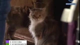 Пензенские волонтеры спасли 26 кошек, у которых пропала хозяйка