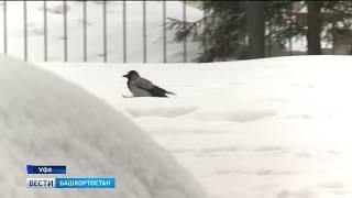 Над Башкирией навис снежный циклон