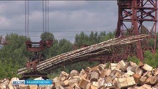 Власти Башкирии решили объявить войну черным лесорубам