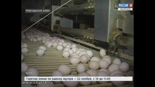 Одно из крупнейших предприятий по производству куриных яиц в Поволжье отметило полувековой юбилей