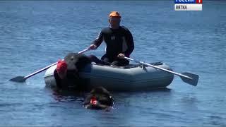 Кировские собаки выступили на Чемпионате ПФО по спасению на водах(ГТРК Вятка)