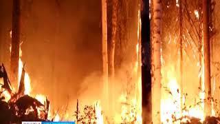 В Красноярском крае горит 682 тысячи гектаров леса