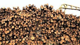 В Советском районе возобновляет работу Самзасский лесопильный завод