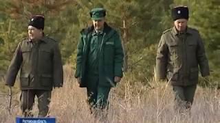 Чтобы не рубили ели: в донских лесах перед новогодними праздниками усиливают охрану