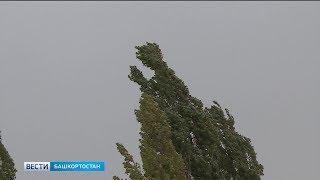 МЧС предупреждает: в Башкирии ожидается сильный ветер и туман