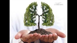 Дерево как материал для творчества и жизни. Утро Губернии от 25.04.2018