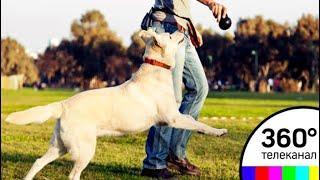 Добросовестных собаководов поощряют материально в районах Подмосковья