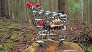 150 рублей за килограмм грибов: в Сургутском районе принимают дары леса