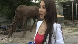 Украшение старого аэропорта Ростова обновят к сентябрю - кони уехали на реставрацию