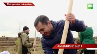 Две тысячи волонтёров приехали на посадку леса в Пестречинский район | ТНВ