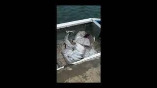 В Астраханской области более двух тонн рыбы выведены из незаконного оборота