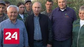Владимир Путин поздравил с праздником работников сельского хозяйства - Россия 24