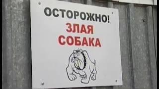 """""""Много вони и грязи!"""" Жительница Челябинска устроила собачий питомник на садовом участке"""