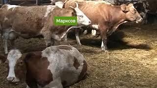 В хозяйствах области увеличились надои молока