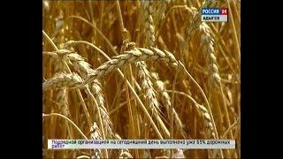 В Адыгее подходит к концу уборка озимых зерновых и зимующих культур