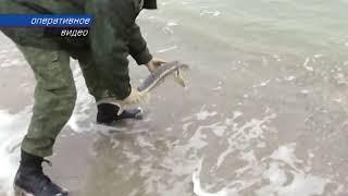 Крымские браконьеры оштрафованы на 1,5 млн.  рублей