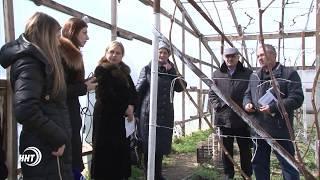 В Дагестане начался сезон  посадки земляники