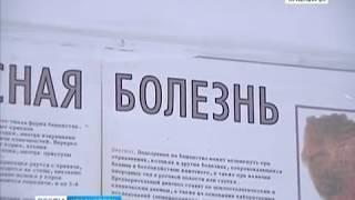 В Железногорске из-за бешеной лисы ввели карантин