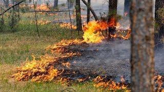 Площадь в 300 футбольных полей: в Югре горит лес