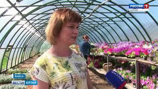 В Бийске бесплатно раздали 15 тысяч саженцев цветов