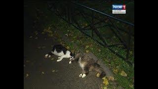 Вести Санкт-Петербург. Выпуск 14:20 от 11.10.2018