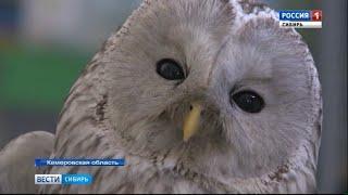 Кемеровские ветеринары спасают умирающих пернатых