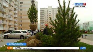 Полторы тысячи саженцев посадили в Плющихинском микрорайоне Новосибирска