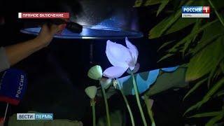 В Ботаническом саду возобновили ночные экскурсии
