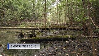 В Уфе погибает целый лес