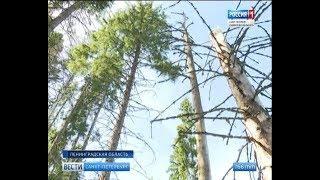 Вести Санкт-Петербург. Выпуск 11:40 от 16.08.2018