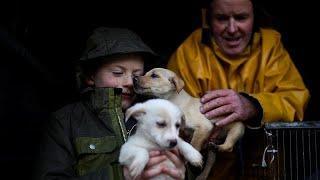 В Италии разоблачили торговцев щенками