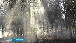 В республике сохраняется высокий уровень пожарной опасности