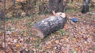 Лесной браконьер из Рузаевского района