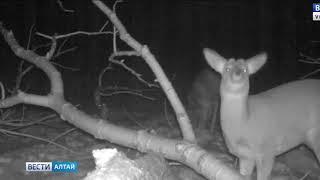 В охраняемых лесах Алтайского края открываются «столовые» для диких животных