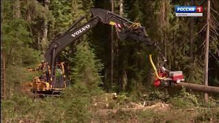Компания «СВЕЗА Кострома» готова увеличить инвестиции в лесную отрасль