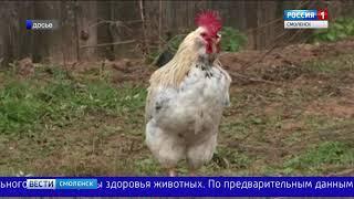 На Смоленщине зарегистрирован очаг птичьего гриппа