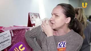 Глазами животных #303. Выставка кошек «Кубок Башкортостана 2018»