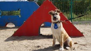 Детям Когалыма хотят ограничить доступ на площадки для выгула собак