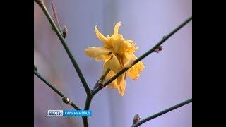 Из-за плюсовой температуры некоторые растения перепутали времена года