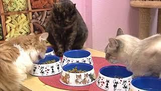 «Вести» провели фотосессию для котов